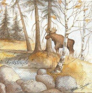 Älg i skogen   kaf1004   kaf1004