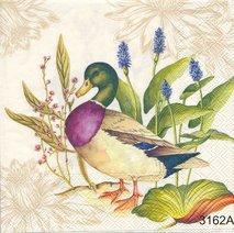 Olika fåglar   kaf1022