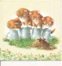 Små kattungar och möss   3036