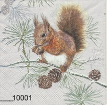 Ekorre   kaf10001