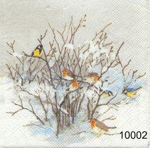 Fåglar i buske   kaf10002