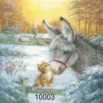 Åsna och kattunge   kaf10003